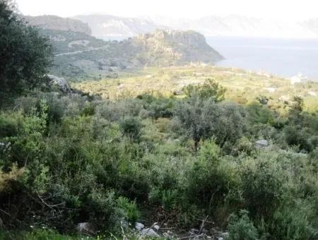 Marmaris Kumlubük Koyunda 15000M2 Deniz Manzaralı Satılık Arsa